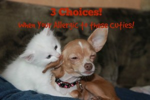 4 Choices of an Allergic Landlord Regarding Pets