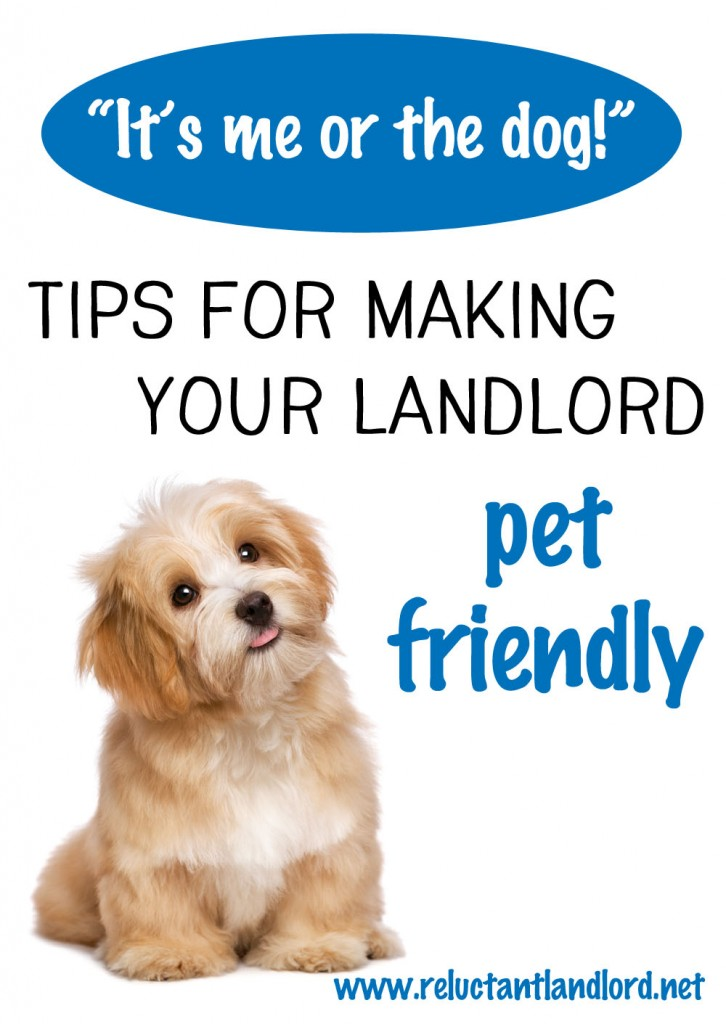 Tips for Making Your Landlord Pet Friendly